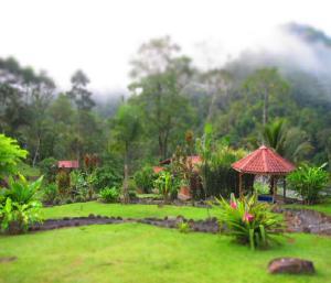 jungle lodge 2