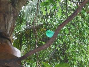 Bird at Serapiqui Lodge