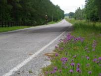d purple flowers