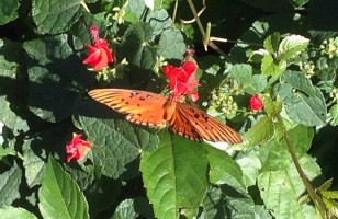 Butterfly - I-10 RV Park